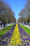 漫步在公园 免版税库存照片