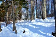 漫步在冬天 风景在Poiana布拉索夫和所罗门石头 向冬天驻地的路 库存照片