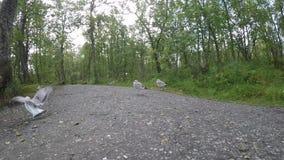 漫步在森林里的美丽的镇静海鸥在池塘岸旁边在夏天, 股票视频