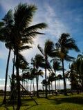 漫步在海洋驱动,南海滩,迈阿密;棕榈树和鲜绿色的草坪;大风天 免版税库存照片