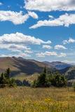 漫步寺庙山草甸,科罗拉多在大风天 免版税库存照片