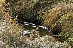 漫步的流动的小湾河床 库存照片