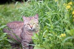 漫步的猫 免版税库存照片