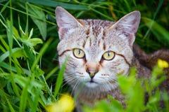 漫步的猫 库存照片