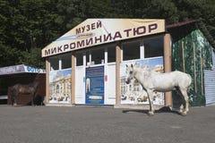 漫步近缩样博物馆的马在山大阿安的在索契玉簪属植物区  免版税库存图片