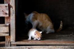 漫步远离妈妈的小猫 免版税库存照片