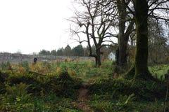 漫步通过领域和树 免版税库存照片