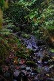 漫过岩石的河在青苔填装了绿色秋天森林 免版税库存照片