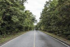 漫长的路在森林 免版税库存图片