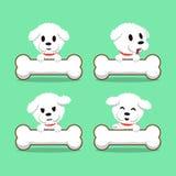 漫画人物bichon与大骨头的frise狗 免版税图库摄影