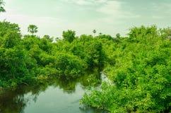 潘塔纳尔湿地河和森林  库存图片