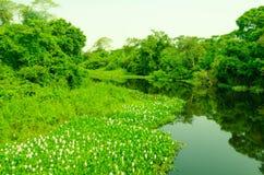 潘塔纳尔湿地河和森林  库存照片