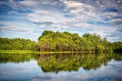 潘塔纳尔湿地 库存图片