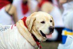 潘普洛纳, SPAIN-JULY 10 :在服装的一条狗在圣F期间的街道上 免版税库存图片