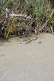 潜伏的沼泽 库存图片