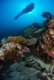 潜水员妇女 免版税图库摄影