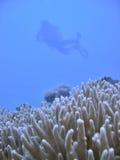 潜水员水肺影子 库存照片