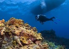 潜水员水肺蜗牛氚核喇叭 免版税库存照片