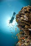 潜水员礁石场面热带水肺的剪影 库存照片