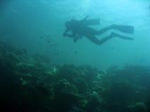潜水员礁石水肺sipadan墙壁 免版税库存照片