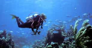 潜水员观点 免版税库存照片