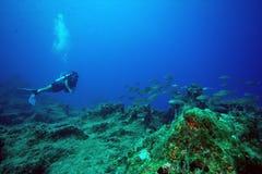 潜水员鱼 免版税库存照片