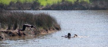 潜水和使用在水中的男孩在第二个海滩,港圣约翰斯,南非 免版税库存照片
