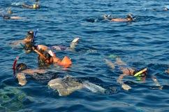 潜水在礁石 免版税库存图片