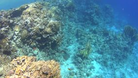 潜水在红海,惊人的珊瑚礁的印象深刻的类型 股票录像