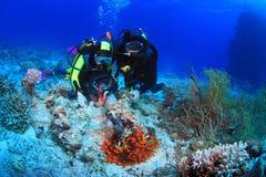 潜水在红海 免版税库存图片