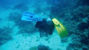 潜水的埃及红海潜水者 股票录像