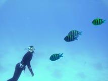 潜水的红海皮肤 库存图片