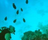 潜水的红色水肺海运 免版税库存照片