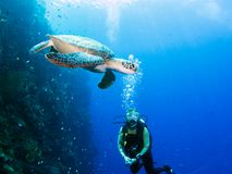 潜水者遇见乌龟 图库摄影