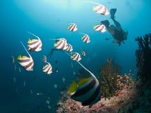 潜水马尔代夫 免版税库存图片