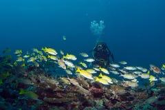 潜水马尔代夫 库存图片