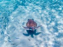 潜航与乌龟 免版税库存照片