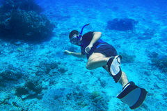 潜航在埃及的红海 免版税库存照片