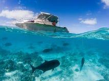 潜航在波里尼西亚热带水晶水域中 免版税库存照片