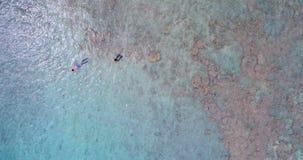 潜航在海4k的夫妇 股票录像