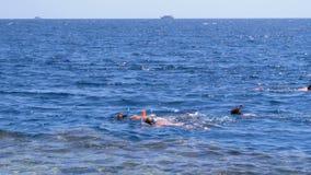 潜航在珊瑚礁附近的红海 埃及,沙姆沙伊赫 影视素材
