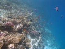 潜航在红海 免版税库存图片