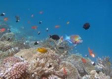 潜航在红海 库存图片