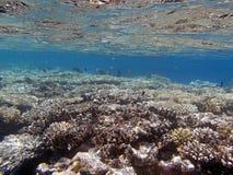 潜航在红海 图库摄影