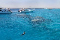 潜航在洪加达(埃及)附近的红海 免版税库存图片