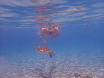 潜航有乌龟库拉索岛景色 免版税图库摄影