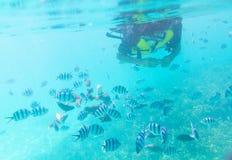 潜航的日本人观看的鱼在海 免版税库存图片
