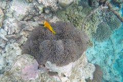 潜航的马尔代夫 图库摄影