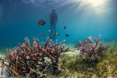 潜水员估计若干困难珊瑚 免版税图库摄影