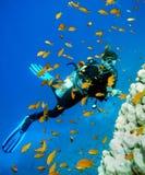 潜水员水肺妇女 免版税库存照片
